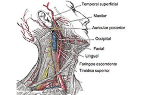Occiptal Nerve